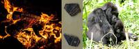 Evolutionary Anthropology Colloquium