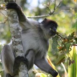 Primatology