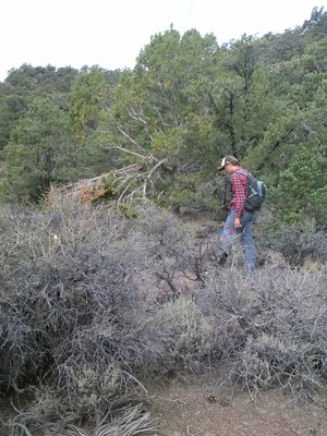 Survey, pinyon zone