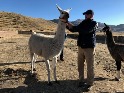 We share camp with some llamas. Dr. Haas with llamas.
